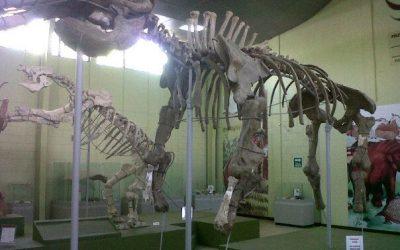 Museo de paleontología, Estanzuela, Zacapa